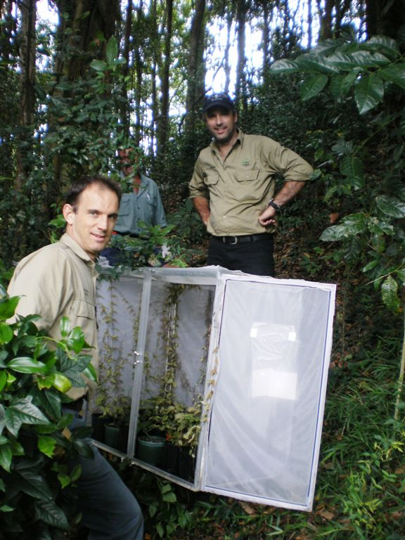 Greg Brown with Sunshine Coast Regional Council releasing cats claw creeper biocontrol